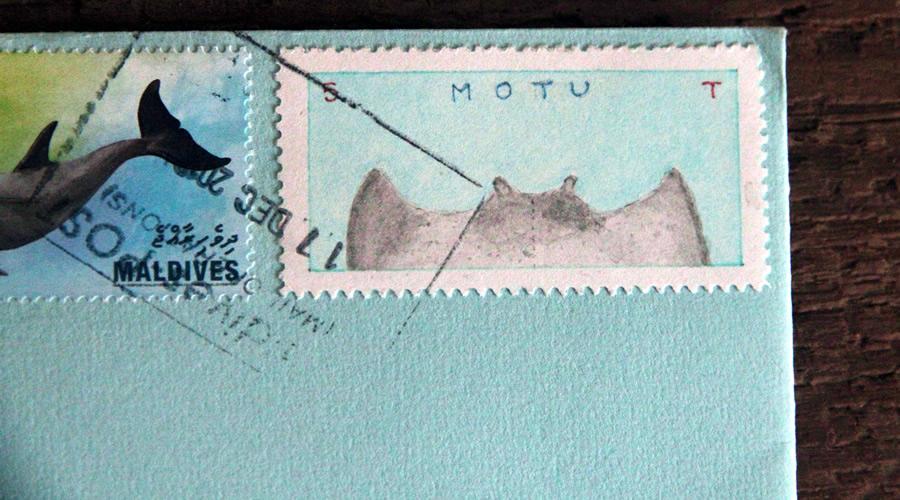 manta ray from motu bruce bowden